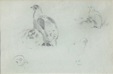 Studies of Partridge