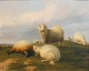Sheep Resting on a Hill