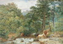 Cattle watering in a Woodland Stream