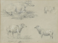 Cattle & Sheep Studies