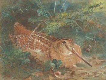A Siesta (Woodcock), Charles Whymper