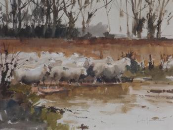 Sheep at Sidlow , John Yardley