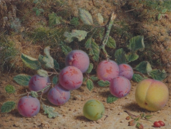Plums, Peach, Greengage & Rosehips, William B  Hough