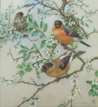 Bullfinches, Winifred Maria Louise    Austen