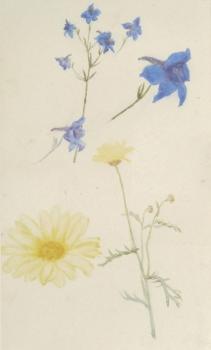 Still Life of Wild Flowers, Helen Allingham
