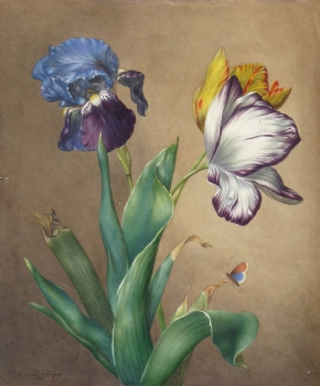 Tulips and Butterfly, Emma Tomkins