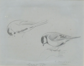 Great Tit, Archibald  Thorburn