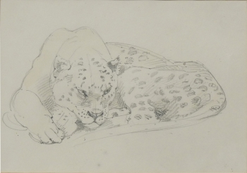 Leopard Sketch, Alfred William Strutt