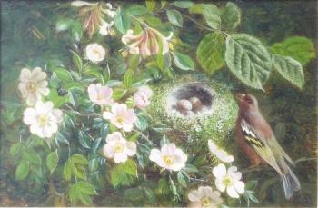Greenfinch & Nest, William Hughes
