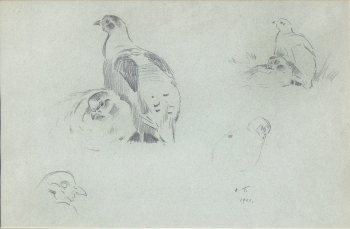 Studies of Partridge, Archibald  Thorburn
