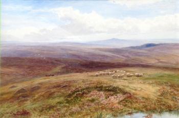 Sheep in a Moorland Landscape, Arthur Henry  Enoch