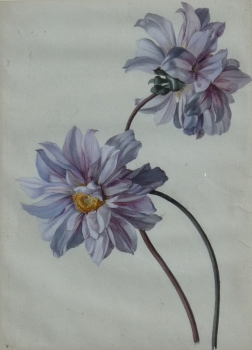 Dahlia, German School