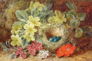 Primroses & Birds-nest, George Clare