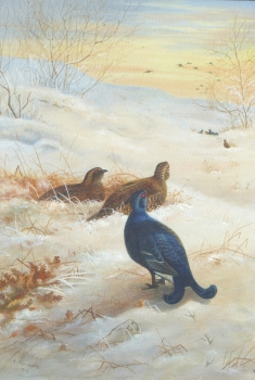 Black Grouse in a Snowy Landscape, Archibald  Thorburn