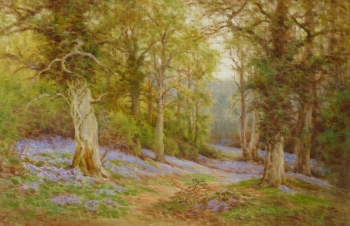 Bluebells in Woodland, Charles James Adams